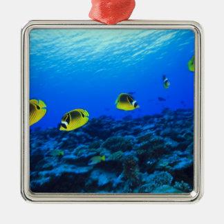 Racoon Butterflyfish Chaetodon lunula), North Christmas Ornament