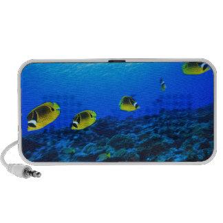 Racoon Butterflyfish Chaetodon lunula), North Portable Speaker