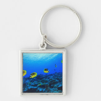 Racoon Butterflyfish Chaetodon lunula), North Silver-Colored Square Keychain
