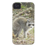 Racoon iPhone 4 Cover