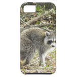 Racoon iPhone 5 Covers