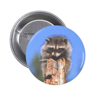 Racoon on Stump Buttons