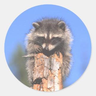 Racoon on Stump Classic Round Sticker
