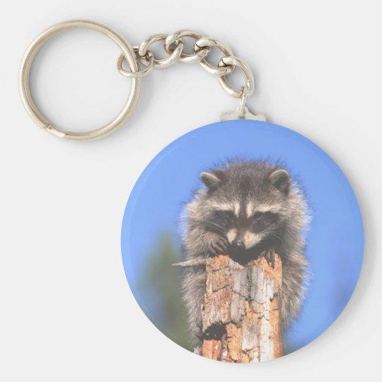 Racoon on Stump Keychain