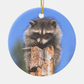 Racoon on Stump Ornament Ornament