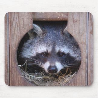 Racoon raccoon mouse pad