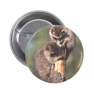 Racoons on Stump 2 Inch Round Button