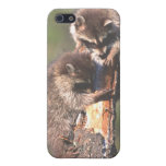 Racoons on Stump iPhone 5 Case