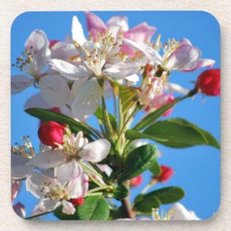 Radiant cherry blossom beverage coaster