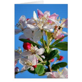 Radiant cherry blossom card
