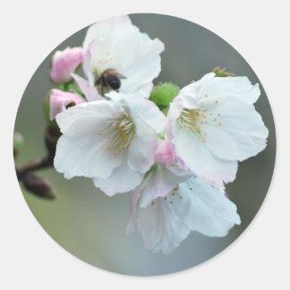 Radiant cherry blossom classic round sticker