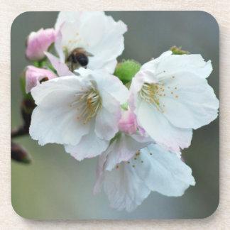 Radiant cherry blossom drink coaster