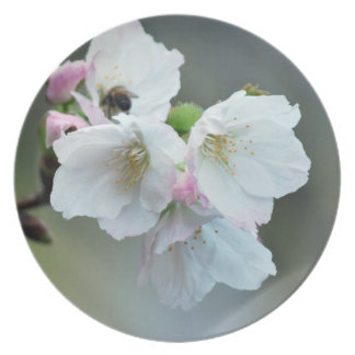 Radiant cherry blossom dinner plate