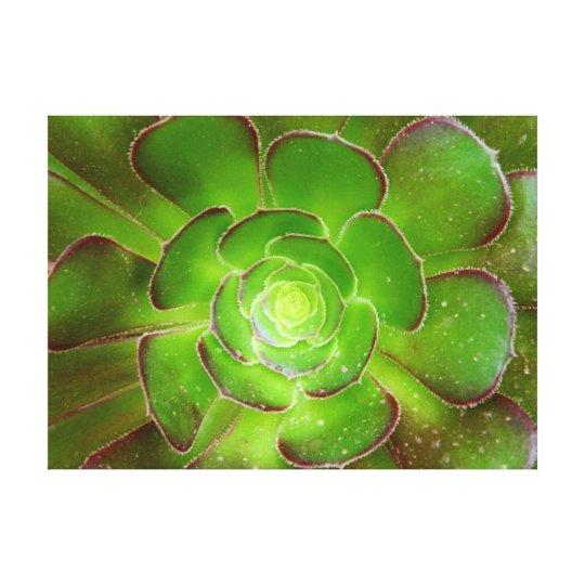 Radiant green succulent plant macro photography canvas print