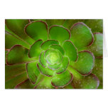 Radiant green succulent plant macro photography greeting card