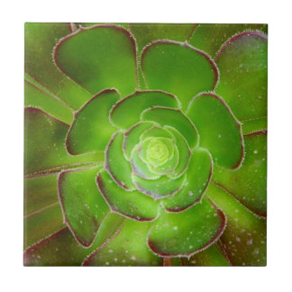 Radiant green succulent plant macro photography ceramic tile