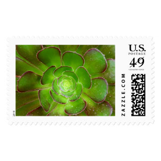 Radiant green succulent plant macro photography postage