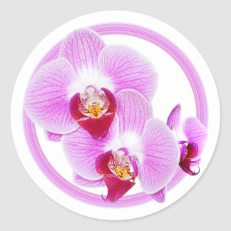 Radiant Orchid Closeup Photo with Circular Frame Classic Round Sticker