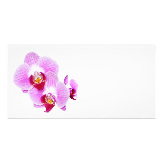 Radiant Orchid Closeup Photograph Card