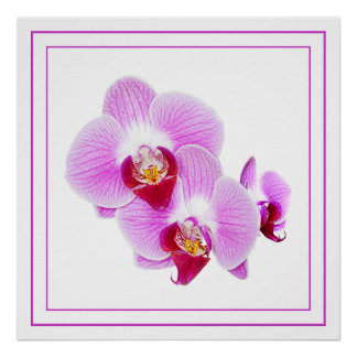Radiant Orchid Closeup Photograph Posters