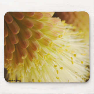 Radiant Torch Lily Mouse Pad