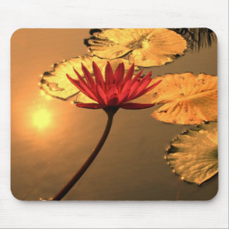 Radiant Water Lily with the Sun Reflecting Mouse Pad
