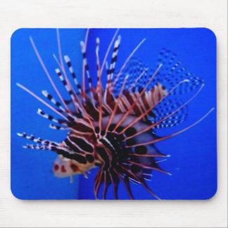 Radiata Lion fish Mouse Pad