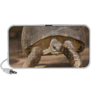 Radiated tortoise, Astrochelys radiata, with a Mini Speaker