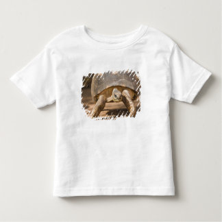 Radiated tortoise, Astrochelys radiata, with a Tee Shirt