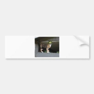 Radioactive kitty car bumper sticker