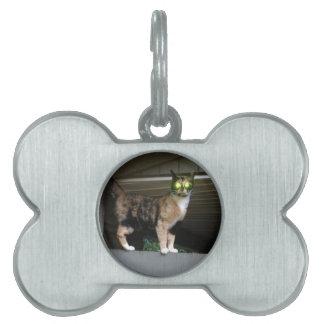 Radioactive kitty pet tag