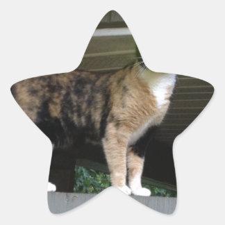 Radioactive kitty star sticker