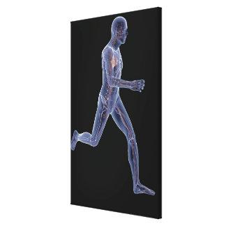 Radiografía del sistema vascular en un hombre corr impresiones en lona