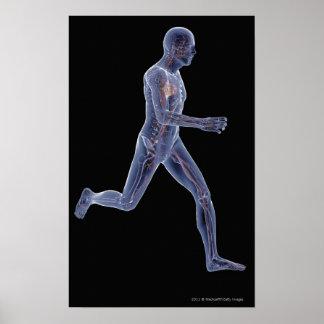 Radiografía del sistema vascular en un hombre corr póster
