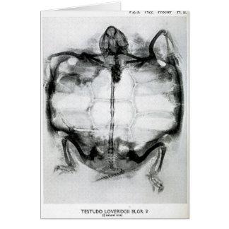 Radiografía del vintage de la tortuga tarjeta de felicitación