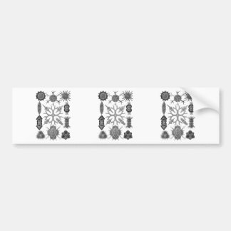 Radiolarians – amoeboid protozoans bumper stickers