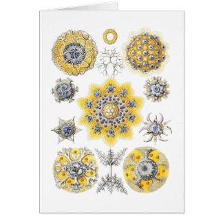 Radiolarians – amoeboid protozoans card