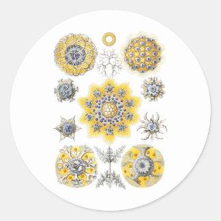 Radiolarians – amoeboid protozoans classic round sticker