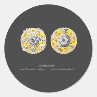 Radiolarians Classic Round Sticker