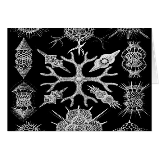 Radiolarians de los organismos de la célula de la  tarjeta