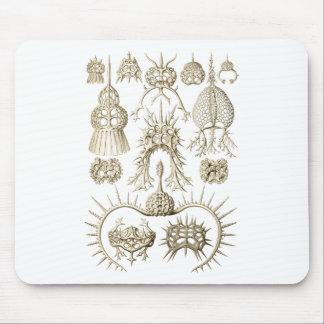 Radiolarians Mouse Pad
