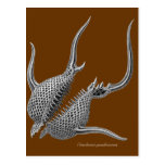 Radiolarians Postcard