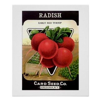 Radish Seeds from Card Seed Co Poster