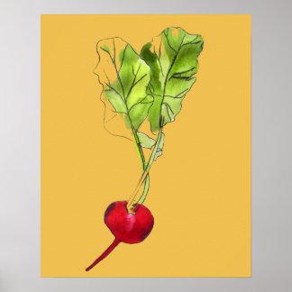 Radish vegetable illustration watercolour art poster