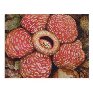 Rafflesia Of Borneo Watercolor Art Postcard