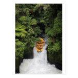 Rafting over waterfall New Zealand Postcard