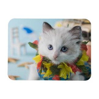 Rag Doll Kitten and Summer Vacation Magnet