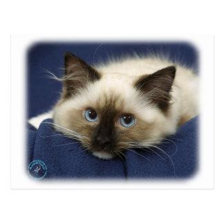 Ragdoll Cat 9W082D-020 Post Cards