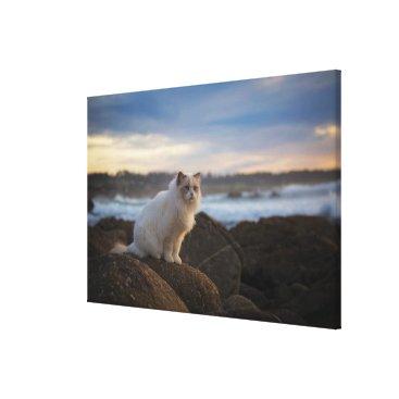 Beach Themed Ragdoll Cat At The Beach Canvas Print