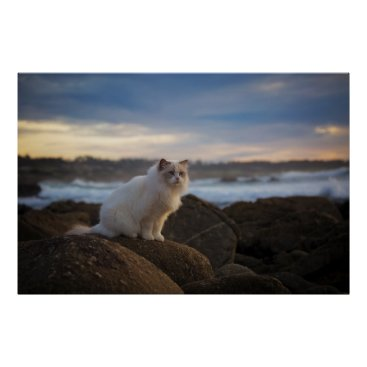 Beach Themed Ragdoll Cat At The Beach Poster